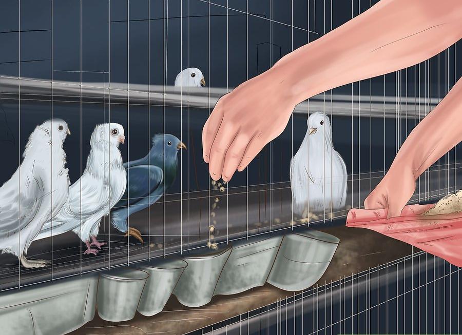 Güvercinlere Nasıl Bakılır?