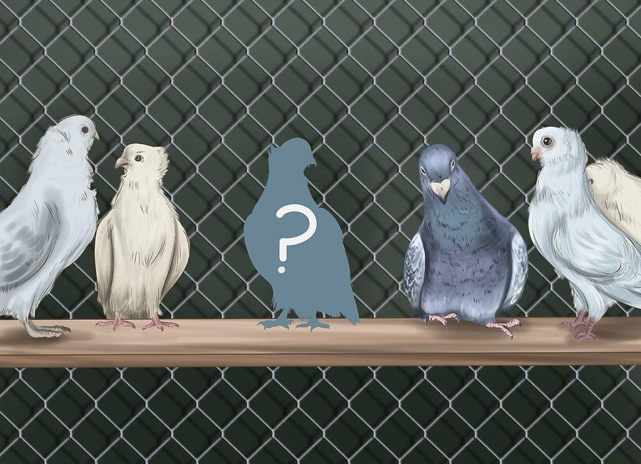 Güvercinler Nasıl Eğitilir ?