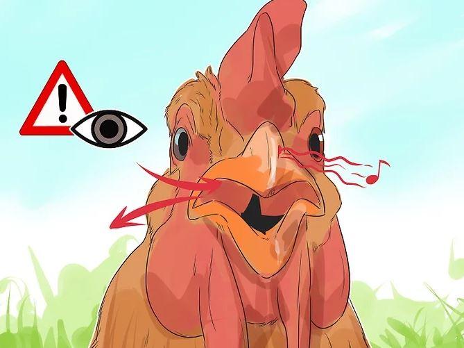 Hasta Tavuk Nasıl Anlaşılır