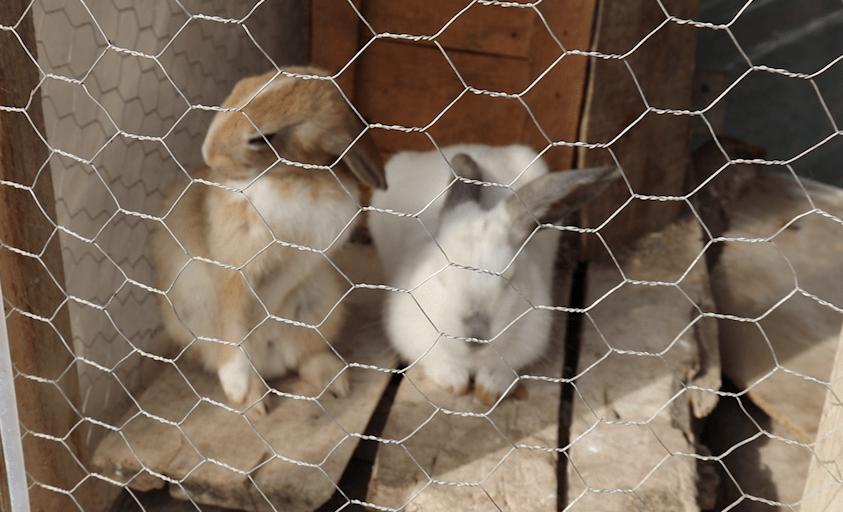 TÜNEL KAZAN TAVŞAN ( Kışlık Tavşan Kafesi Yaptık )