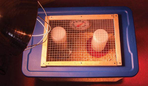 Ucuz Civciv Büyütme Kafesi Nasıl Yapılır (1)-min