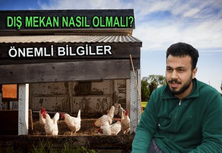 Tavuklarımız İçin Dış Mekan Gezinti Yerleri Nasıl Olmalı-min