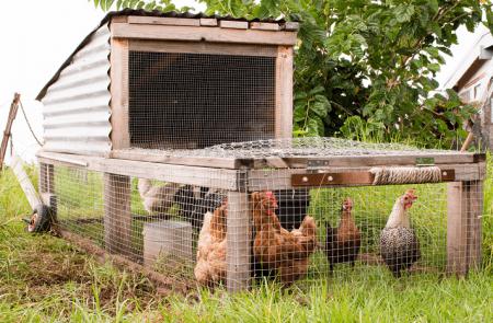 Tavuk Kümes Teli: Bilmeniz Gerekenler