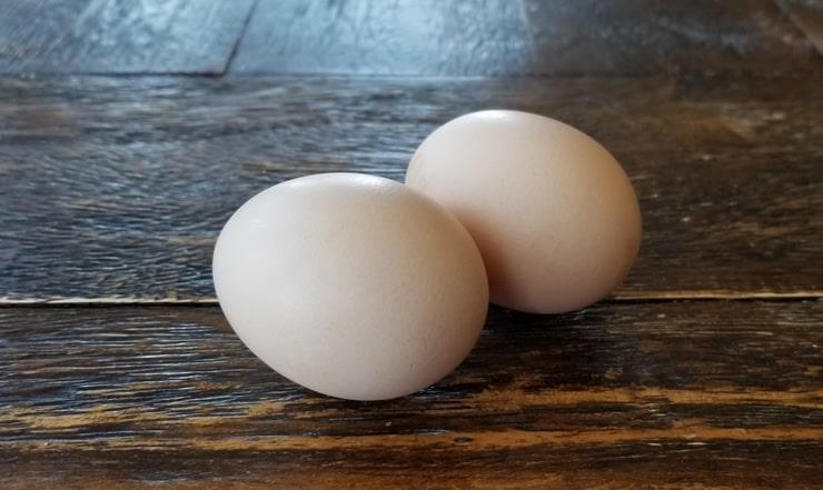 Orpington Tavukları