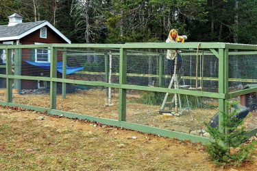 Tavukları Yırtıcılardan Korumak İçin Çitli Kümes Yapımı