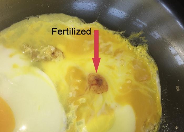 Döllü yumurta nasıl anlaşılır
