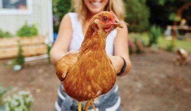 Tavuk Sahipleri İçin 50 İpucu